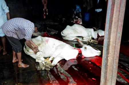 http://i0.wp.com/upload.wikimedia.org/wikipedia/commons/1/1b/Cow_slaughter.jpg?resize=451%2C298