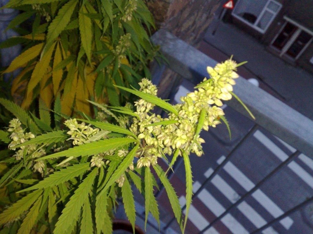 Permalink to Common Yellow Garden Flowers
