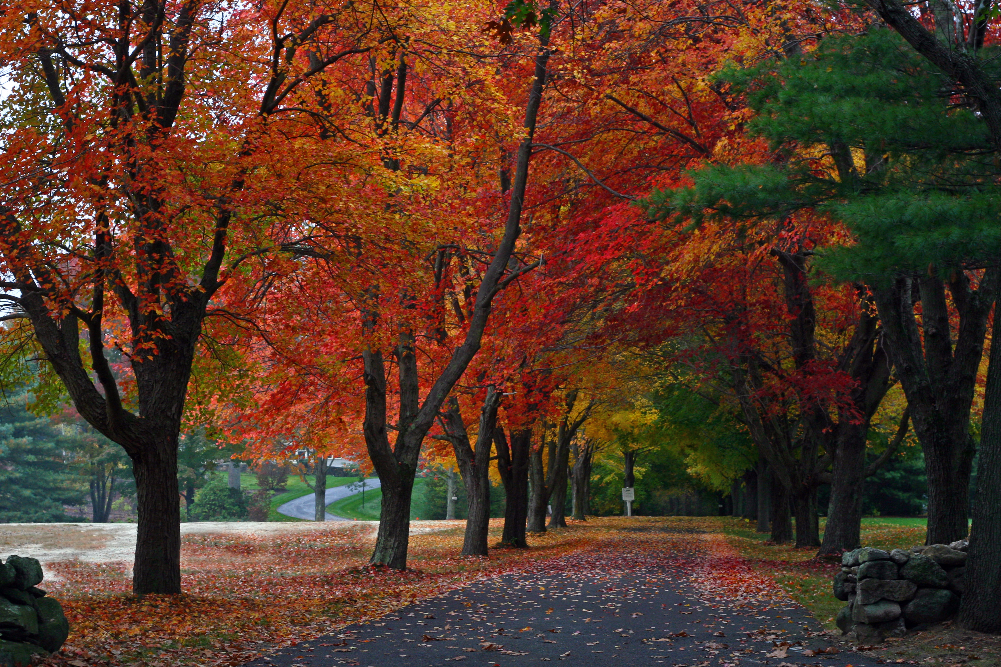 Fall Colors Wallpaper New England File New England Driveway Jpg Wikimedia Commons