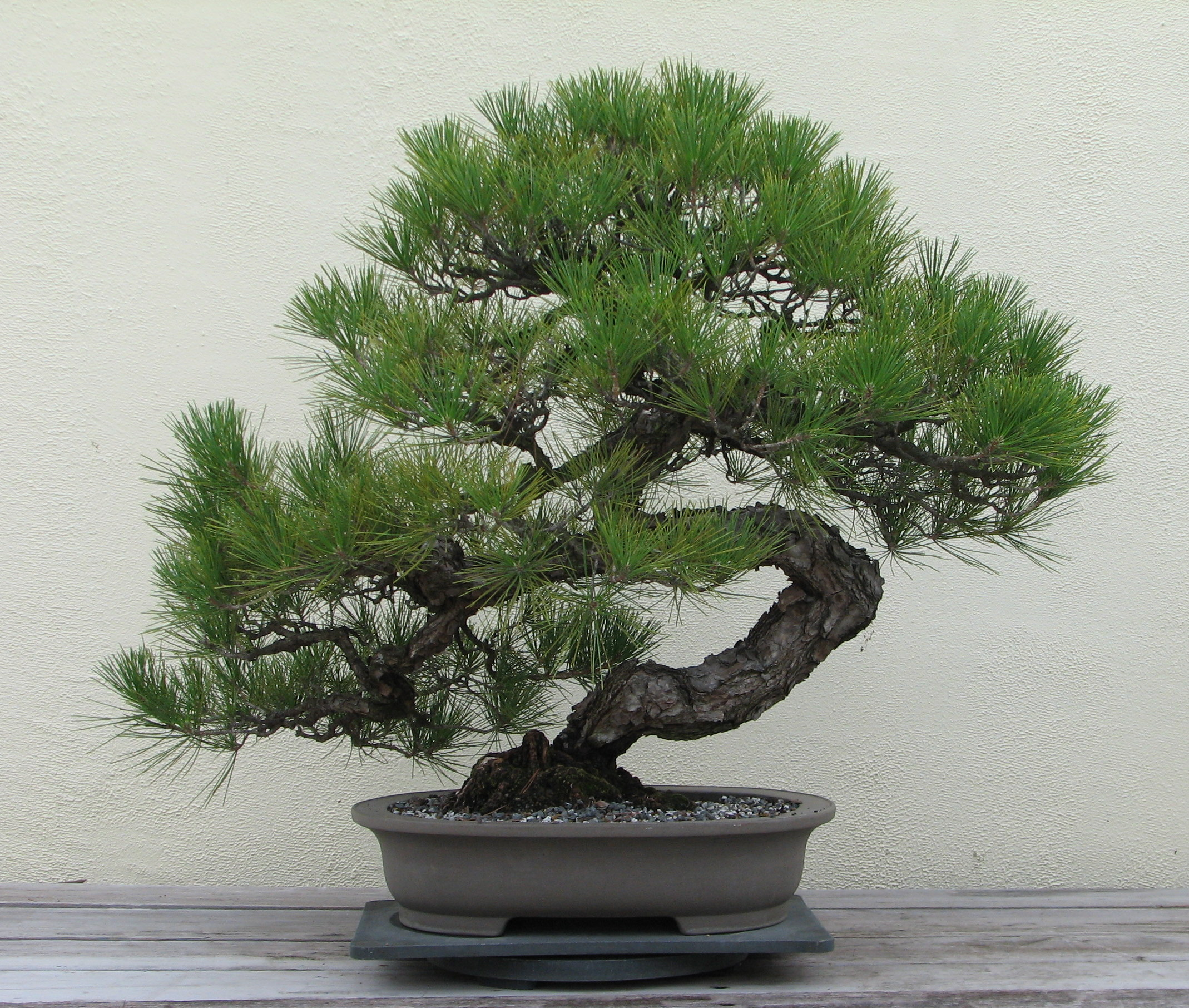 Bonsai Aarde Bonsai Wikipedia