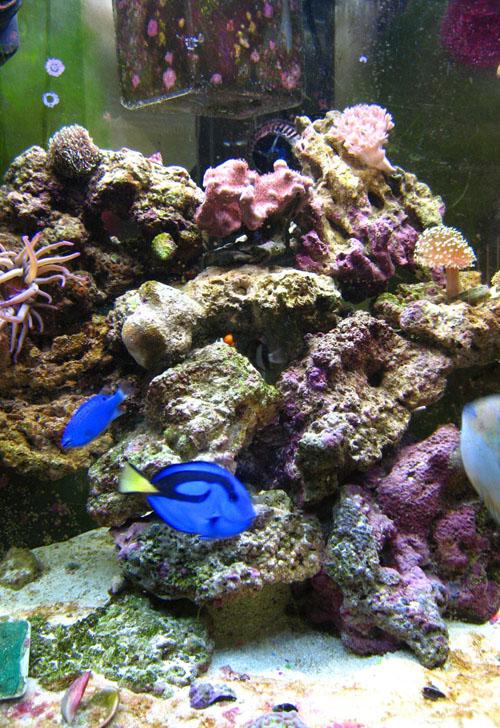 Marine aquarium - Wikipedia