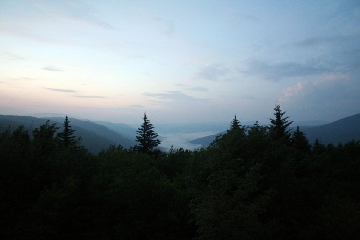 Only Black Wallpaper File Monogahel Forest Night Forestwander Jpg Wikimedia