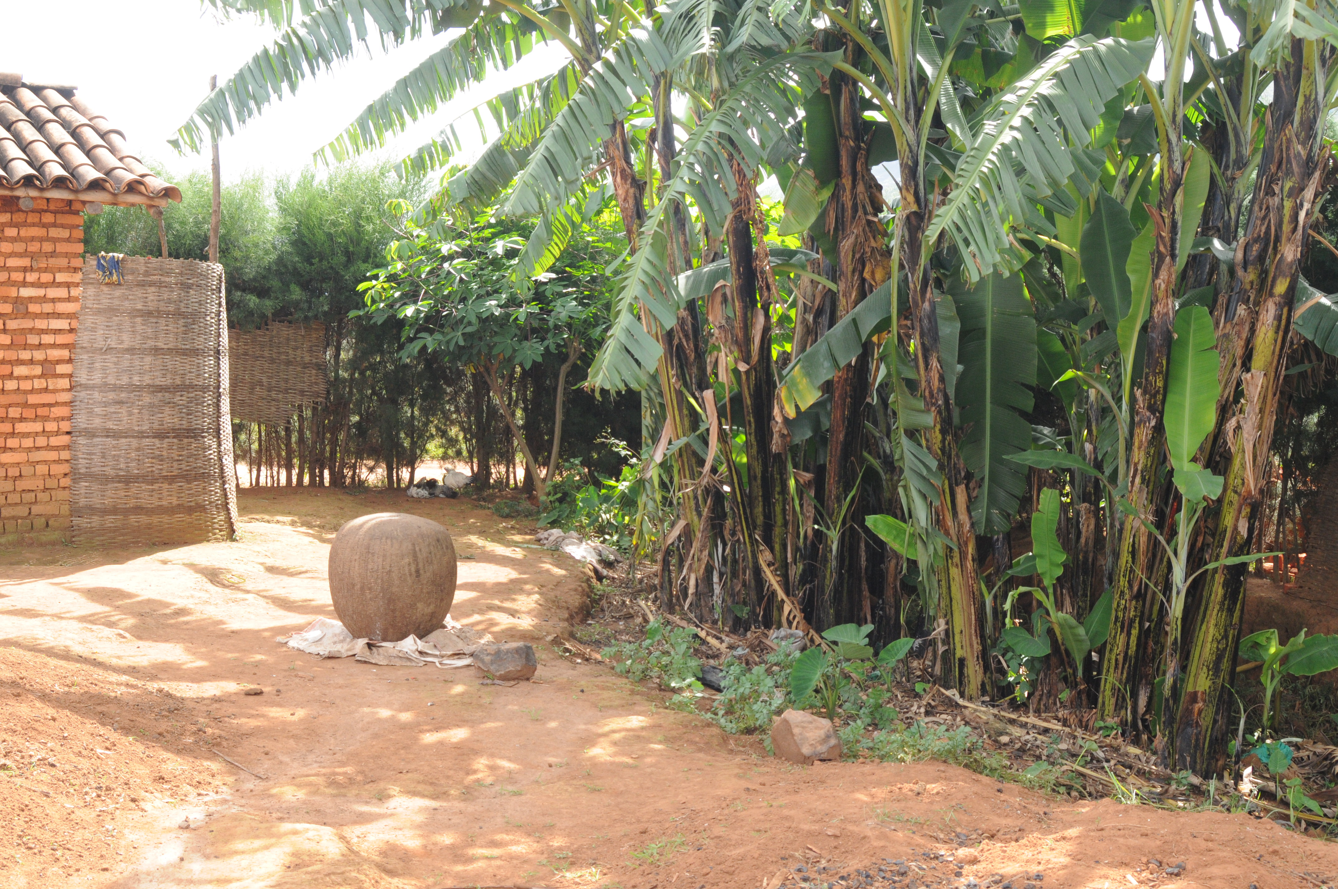 Backyard Shower File Backyard Of A Household With Banana Trees And Shower