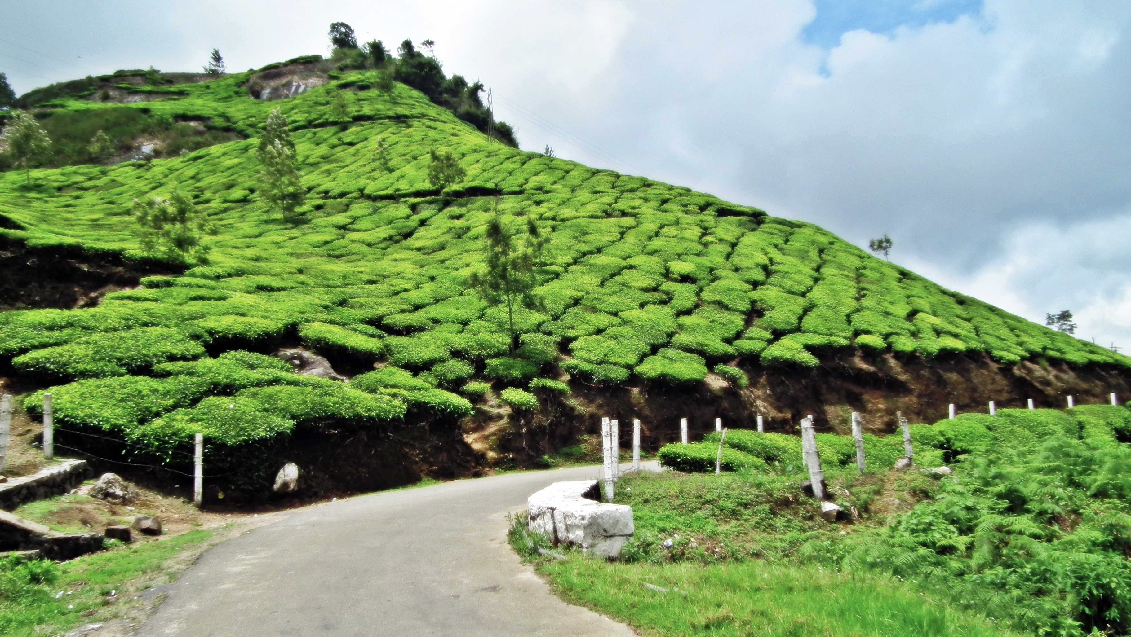 Ooty Hd Wallpapers File Tea Gardens In Munnar Town Jpg Wikimedia Commons