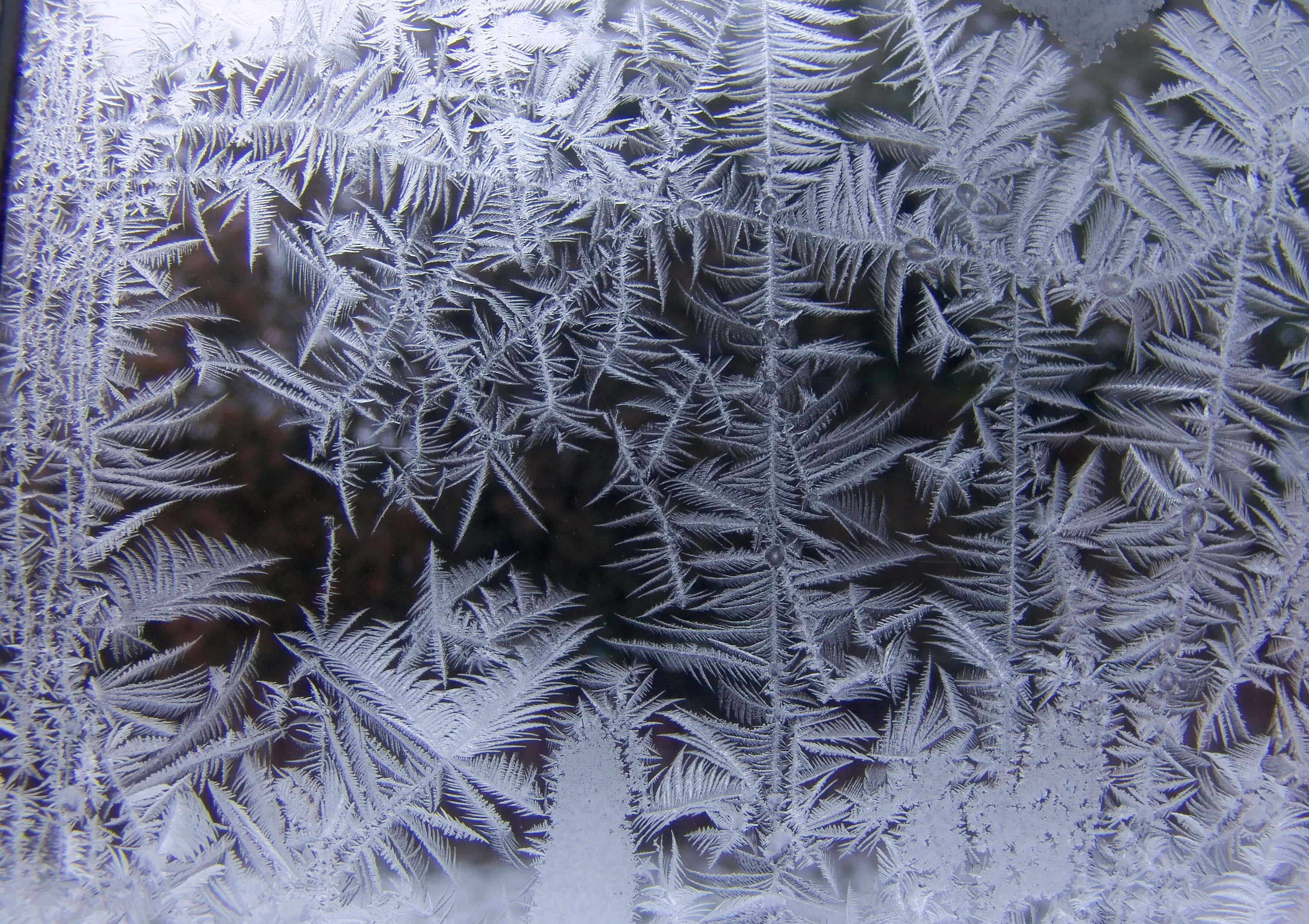 Windows Fall Wallpaper File Ice Crystals At Window07 Jpg Wikimedia Commons