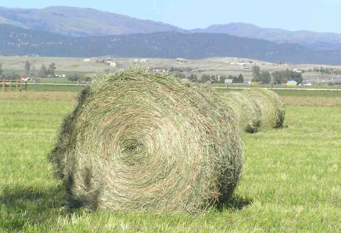 Feed Hay Hay Wikipedia
