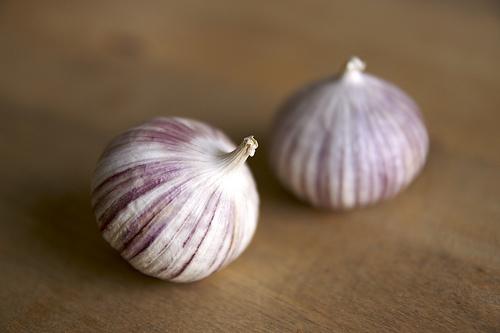 Filesingle Clove Garlicjpg Wikimedia Commons