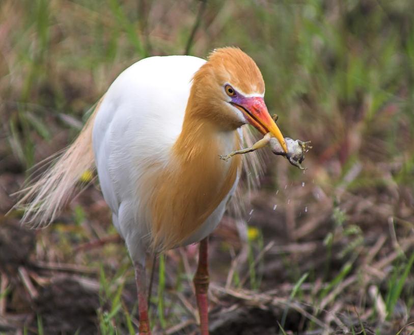 Fall Bird Wallpaper List Of Birds Of Botswana Wikipedia
