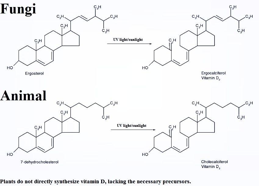 Three types of Estrogen E1- Estrogen post Menopause (Adipose), E2 - return to work medical form