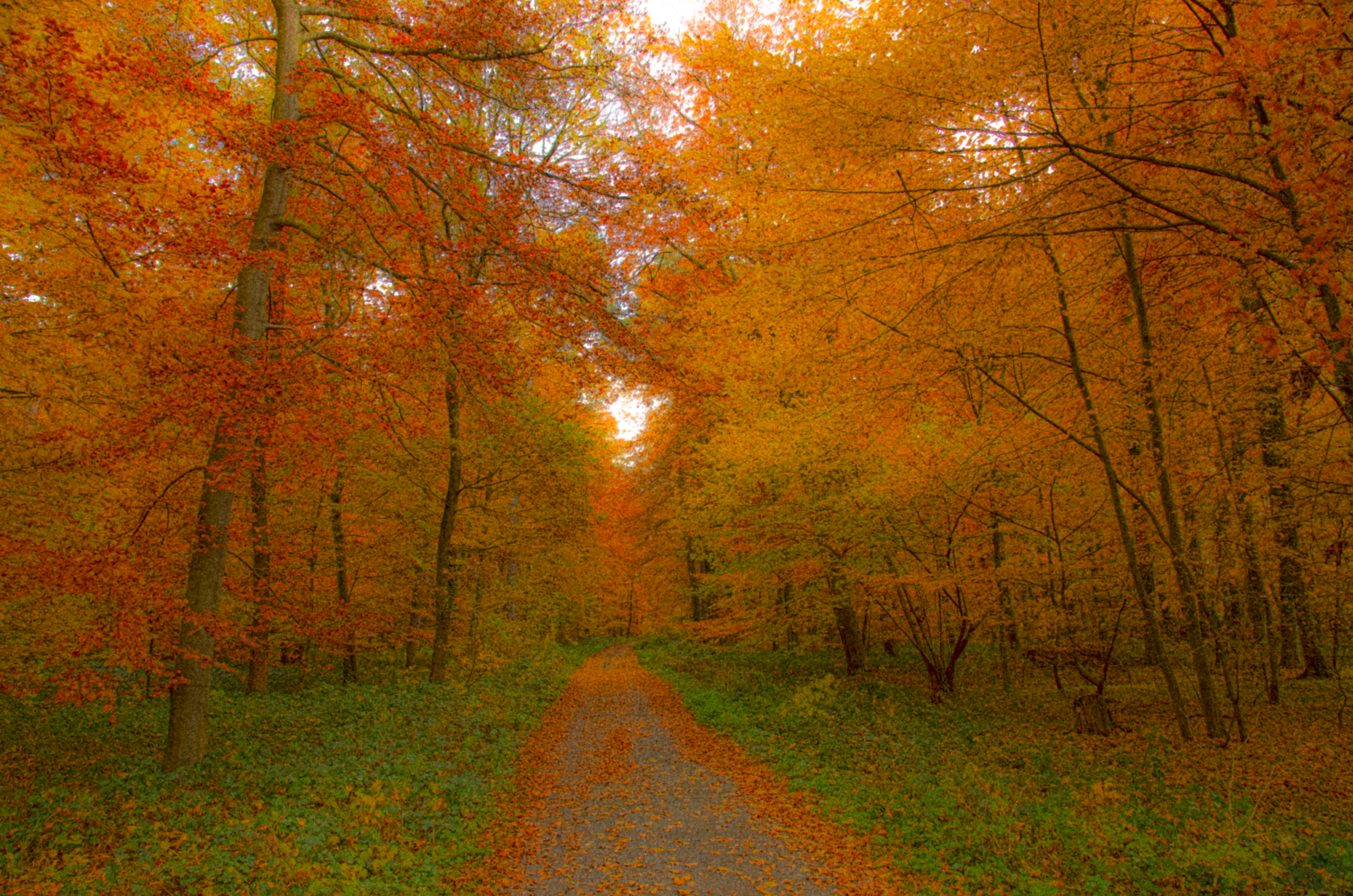 Fall Leaves Road Wallpaper File Autumnal Deciduous Forest Laubwand Im Herbst Jpg