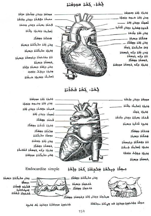 FileHEART PARTS IN ASSYRIAN SYRIACjpg - Wikimedia Commons