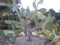 New Blog Here: Arizona backyard landscaping pictures 95