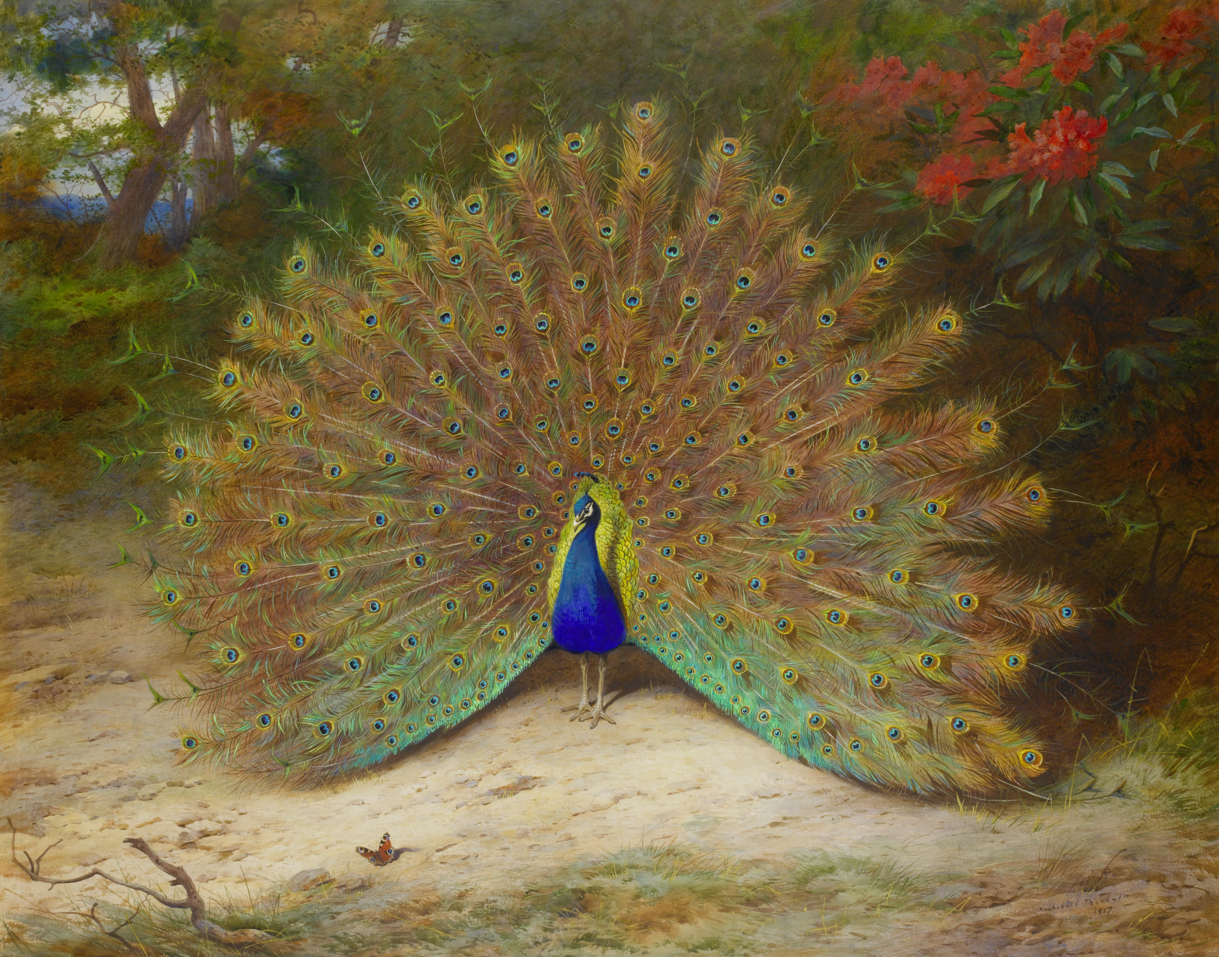 Amazing 3d Peacock Wings Wallpapers Peacock S Garden Archibald Thorburn Peacock And Peacock