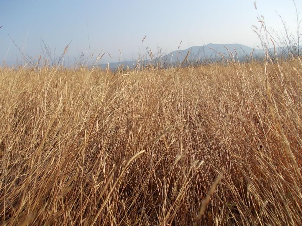 Fall Winter Wallpaper Free File Dry Grass Jpg Wikimedia Commons
