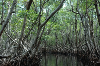 Florida Everglades Mangrove Forests