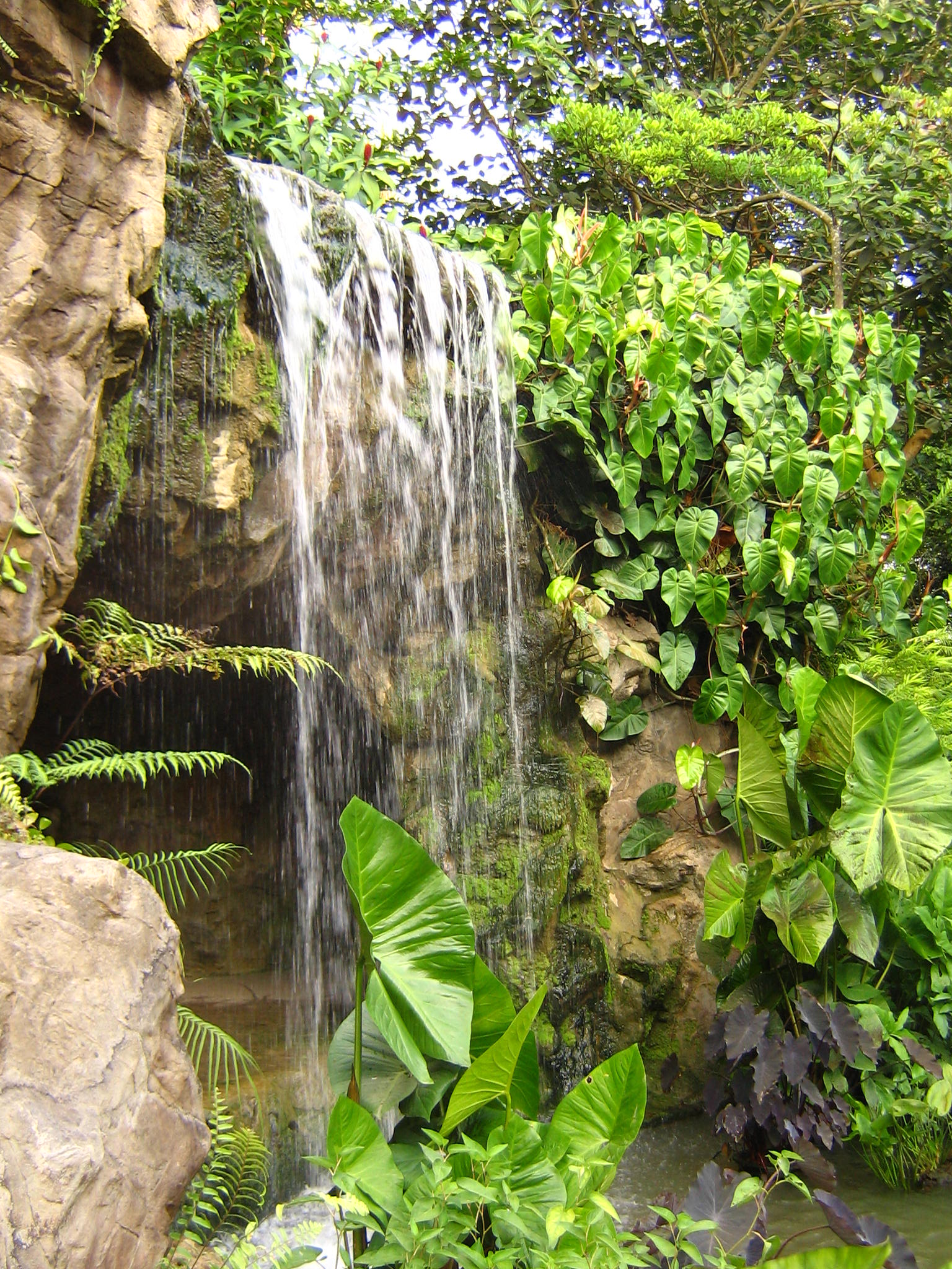 Kant Quotes Wallpaper File Singapore Botanic Gardens Waterfall Jpg Wikimedia
