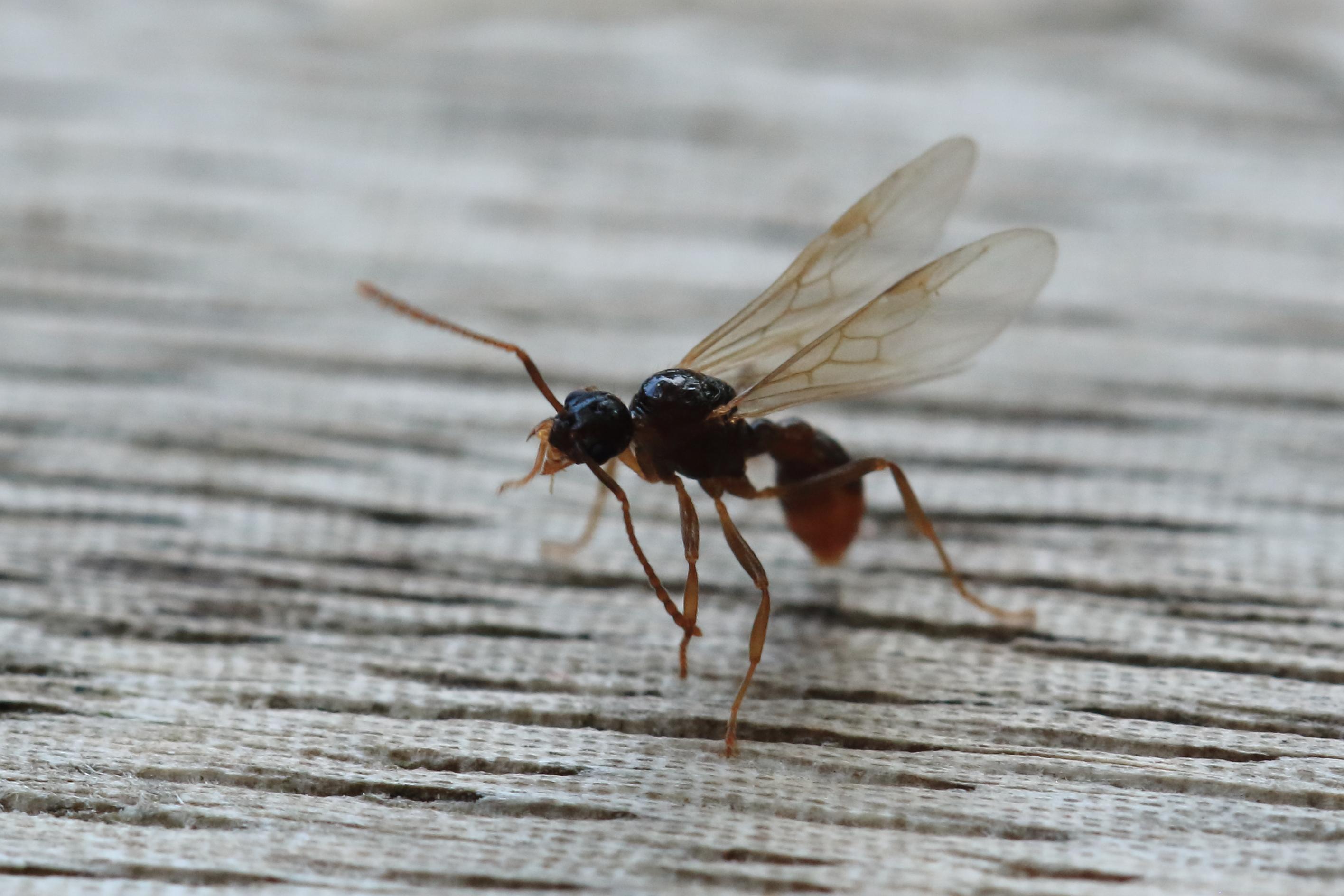 Fliegende Ameisen Im Wohnzimmer | Ikea Küchen Beispiele Küche De Paris
