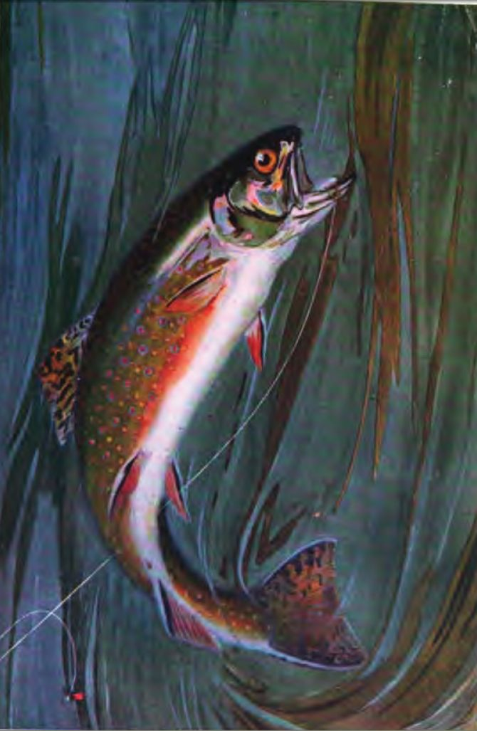 Free Hd Fall Wallpaper Bibliography Of Fly Fishing Species Related Wikipedia
