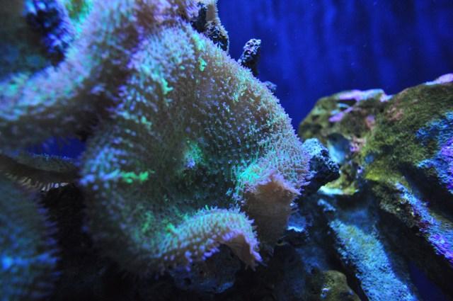 Description Seattle Aquarium 101   tropical Pacific reef (16408318765