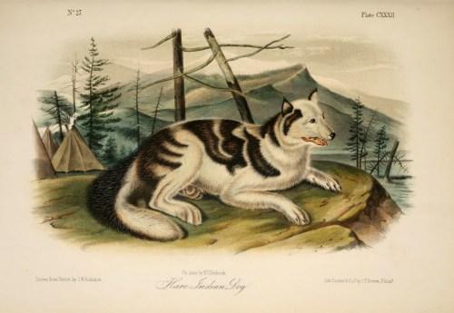 Stupendous List Extinct Dog Breeds Wikiwand Near Extinct Dog Breeds All Extinct Dog Breeds