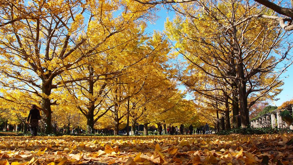 Late Fall Wallpaper Nature 国営昭和記念公園 Wikipedia