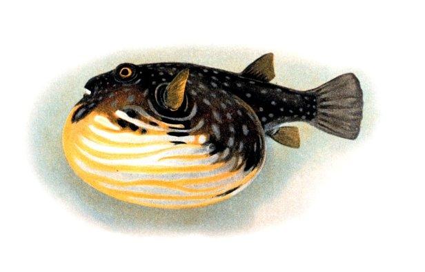 Fish physiology - Wikipedia