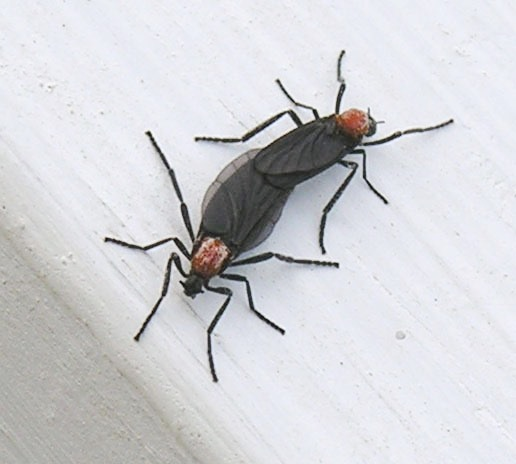 Lovebug - Wikipedia