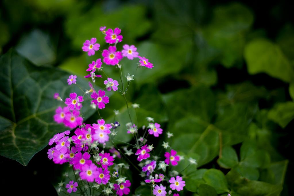 Free Hd Flower Wallpaper File Tiny Flowers 3071341138 Jpg Wikimedia Commons