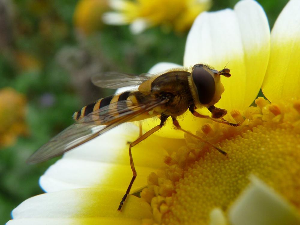 Fly - Wikipedia