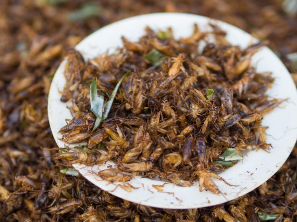 Image result for crickets eaten