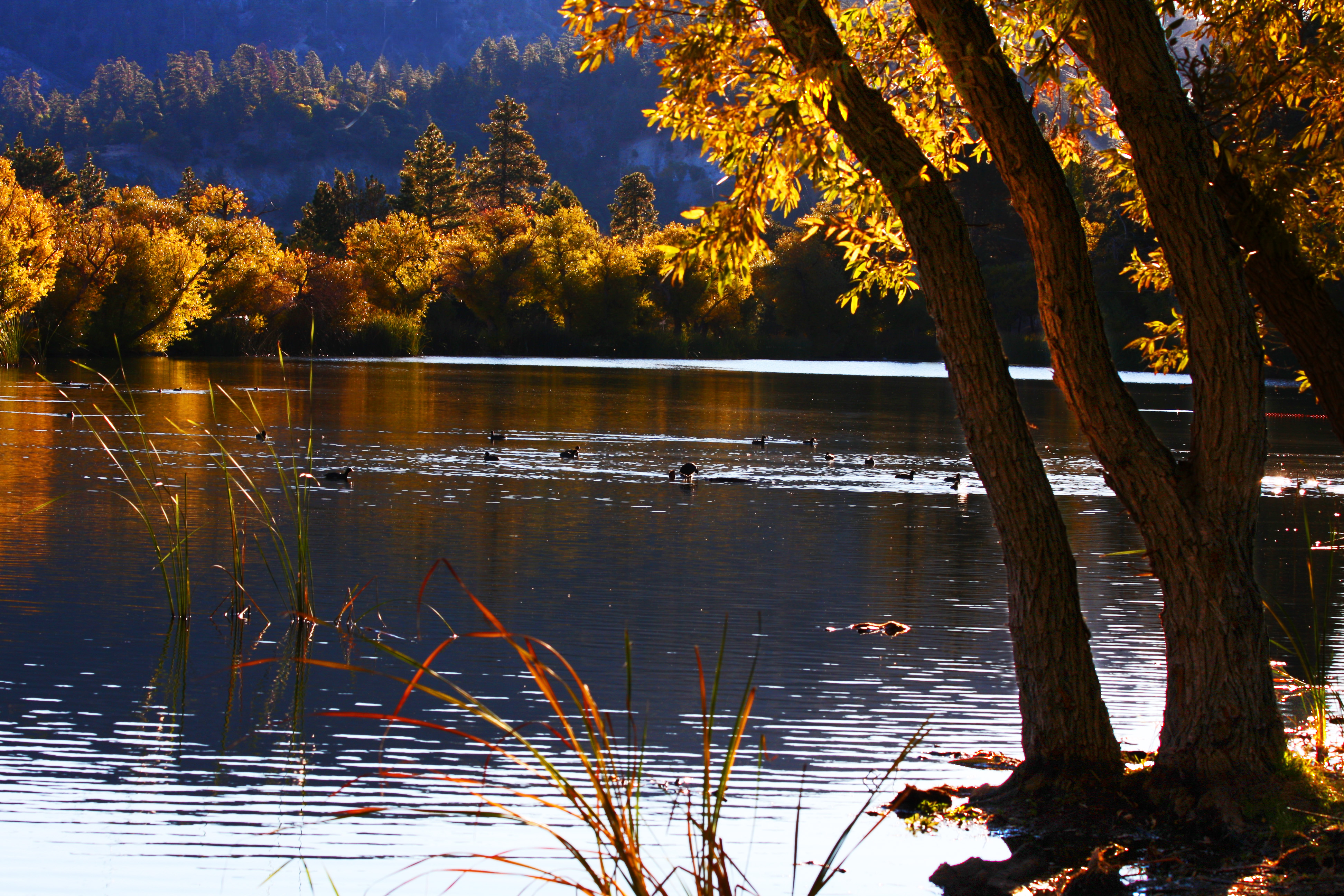 Fall Wallpaper Water File Jackson Lake In Wrightwood California 1 Jpg