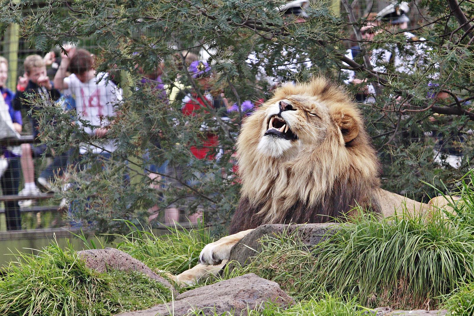Секс среди диких зверей 14 фотография