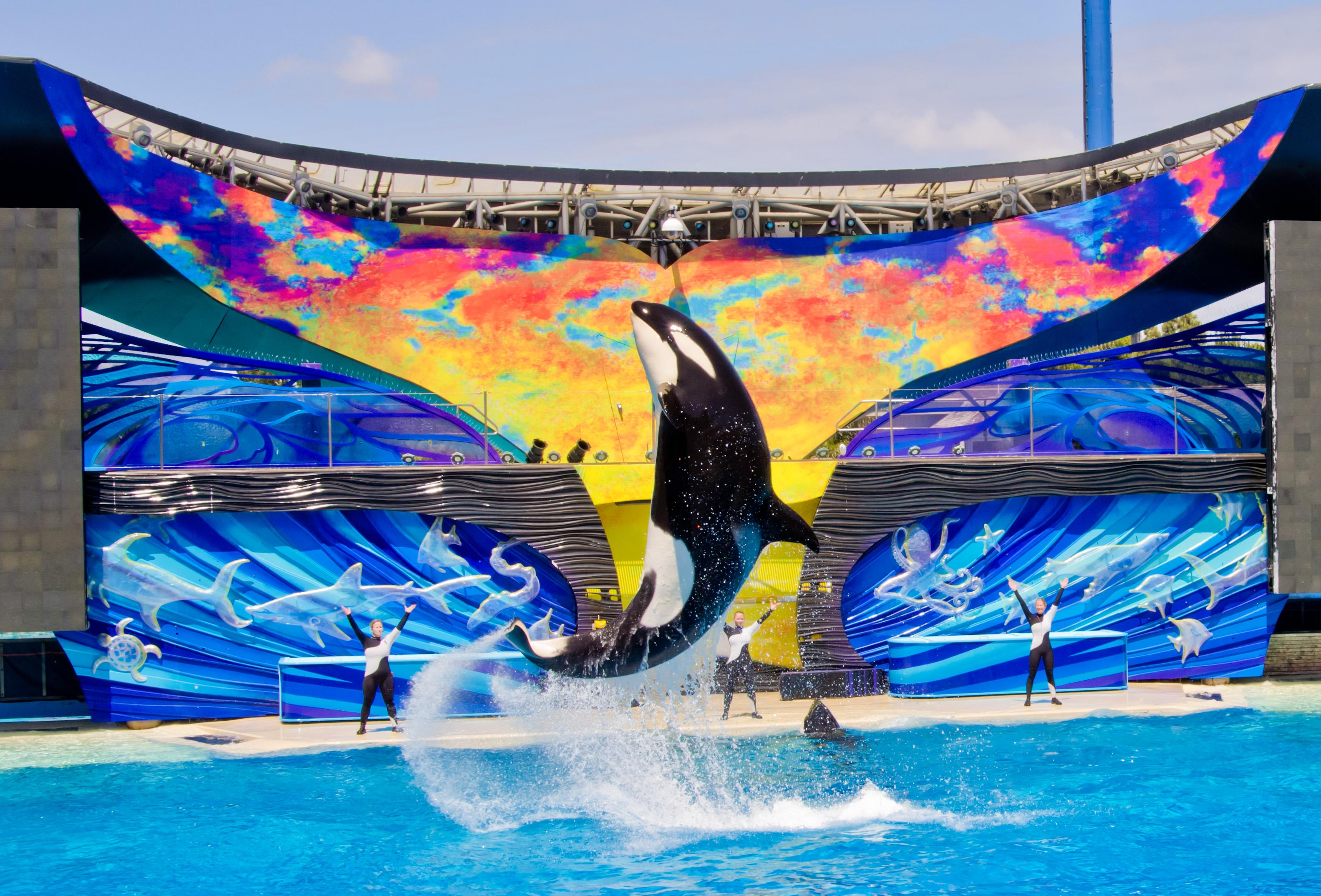 Killer Whale Hd Wallpaper File Seaworld San Diego5 Jpg