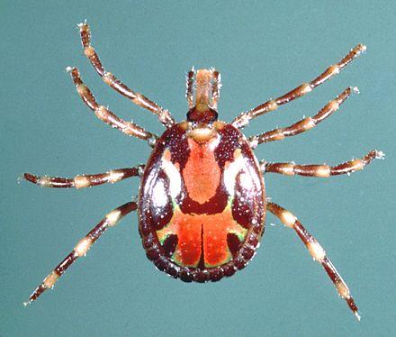 Ticks of domestic animals - Wikipedia