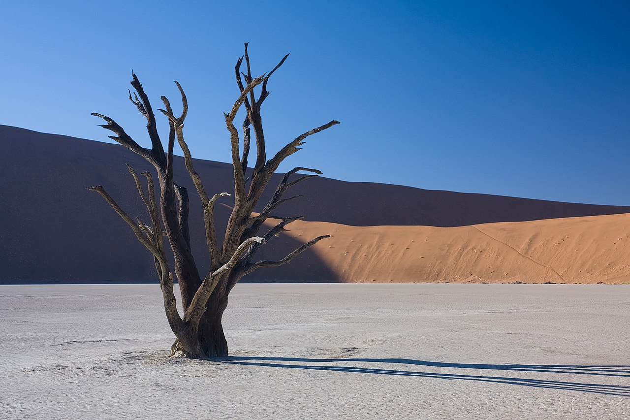 Art Wolfe Namibia Dead Acacia Tree In Dead Vlei Namibia 1280 X 853 Earthporn