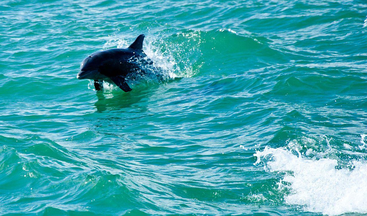 Fish Tank 3d Wallpaper File Dolphin In Water Boca Raton Jpg Wikimedia Commons