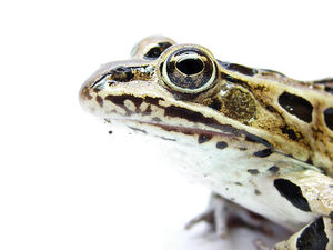 Flickr - Furryscaly - Not a Hypnotoad