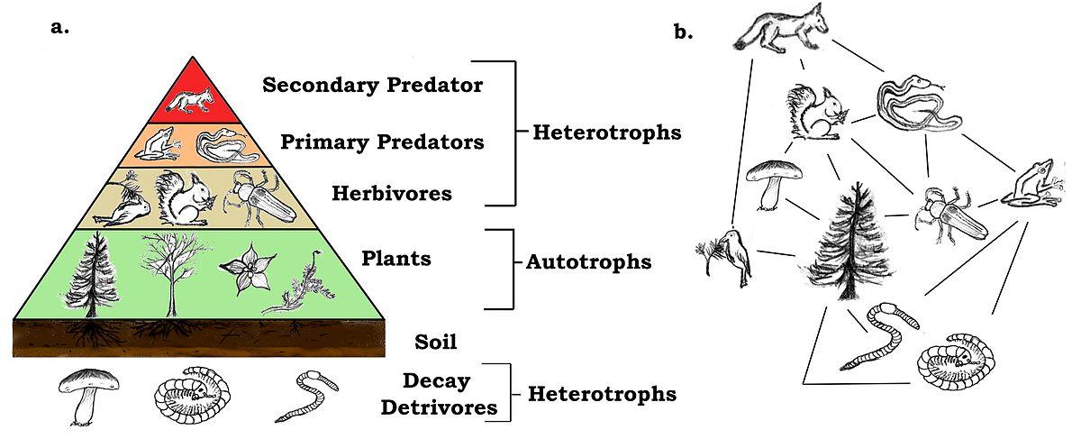 Trophic species - Wikipedia