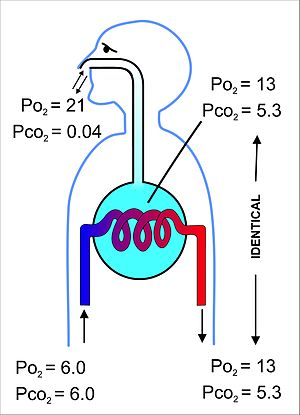 Gas exchange - Wikipedia