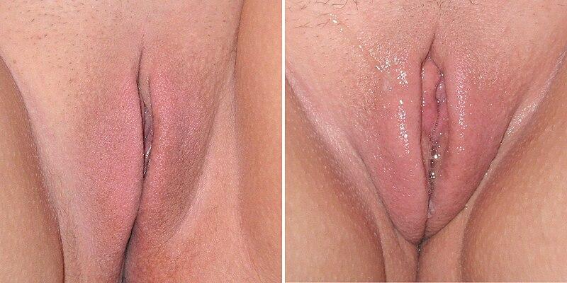 как отличить возбужденную вагину фото