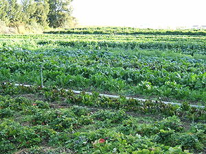 English: Organic cultivation of mixed vegetabl...