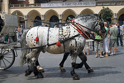 Christmas Falling Snow Wallpaper Note 3 Horse Harness Wikipedia