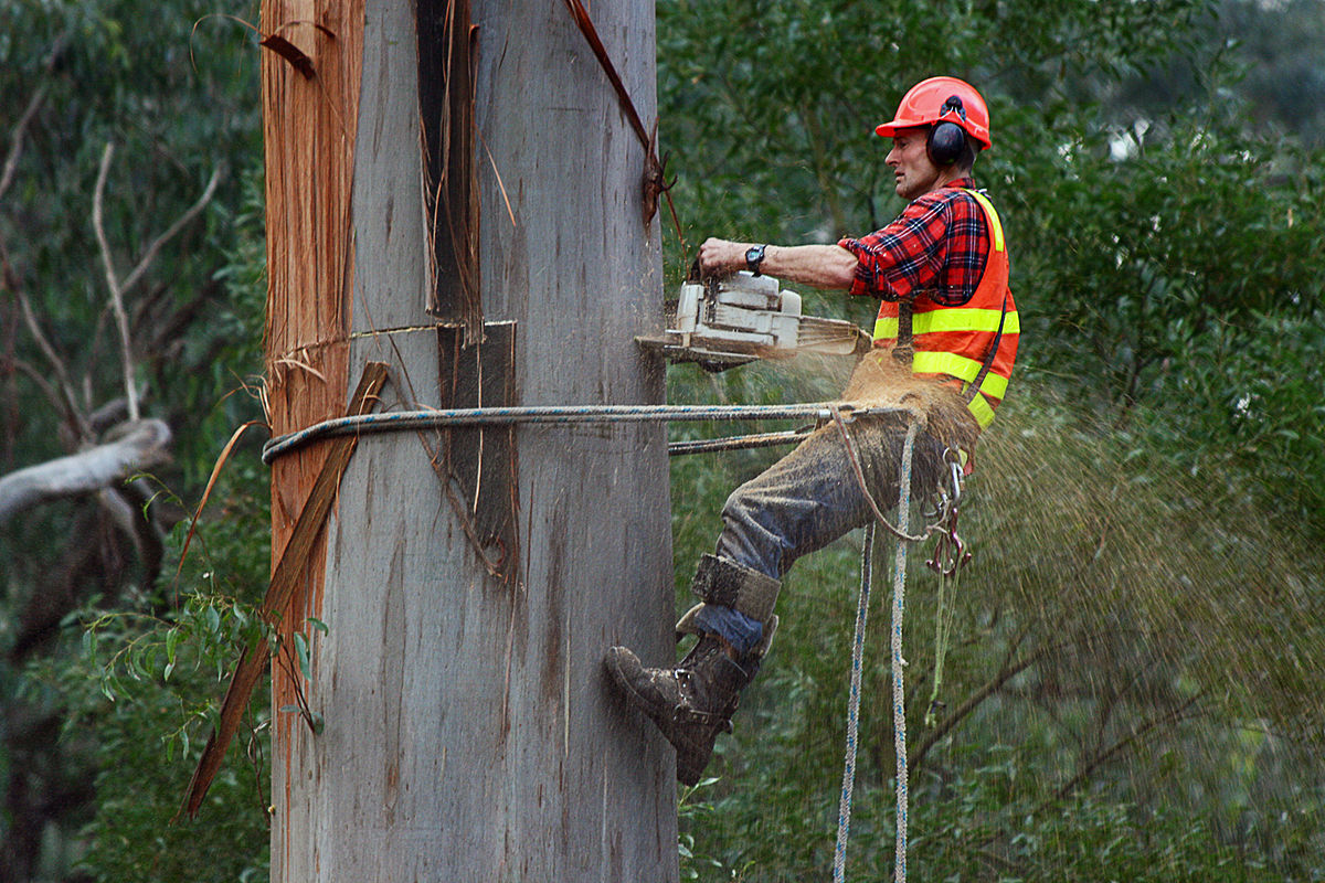 Tree Cutter Arborist Wikipedia