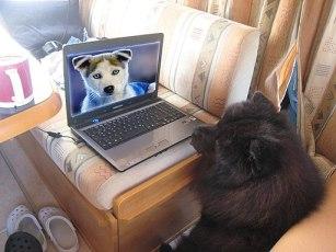 Hund der in den Computer schaut