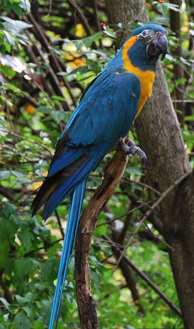 Red Dodo 3d Name Wallpaper Endangered Species Daily News Virtual Popstar