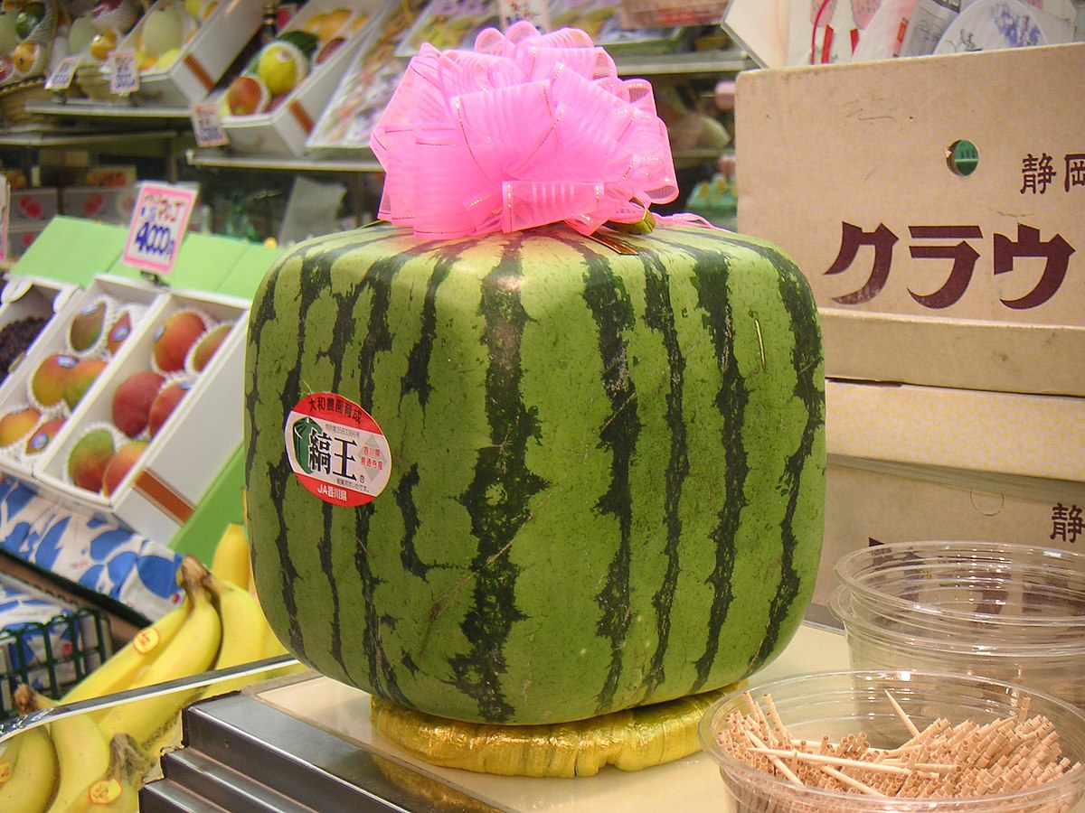 Square Watermelon Wikipedia