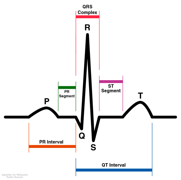 diagram of normal ekg