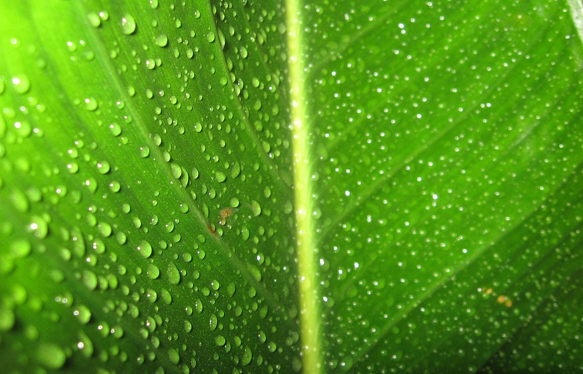 Cmyk Wallpaper Hd 緑 Wikipedia