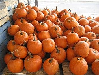 Fall White Pumpkins Wallpaper Pumpkin Wikipedia