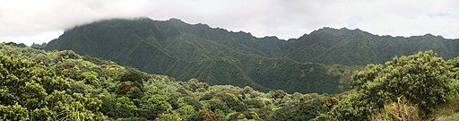 FatuIva TropicalRainForest 20061111